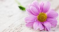doctor-florentina-crisu-homeopatie-iasi