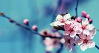 doctor lacramioara cebotaru homeopatie iasi