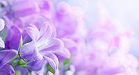 cabinet artmedica homeopatie iasi